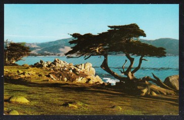 Famous Cypress Tree of Monterey Bay