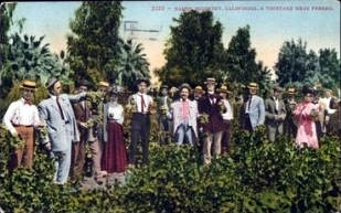Sunday in the Raisin Vines, Fresno, Vintage Postcard