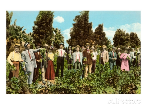 Fresno Raisin Party, Vintage Postcard